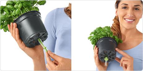 CUBE Color Вставьте фитиль в горшок с зеленью